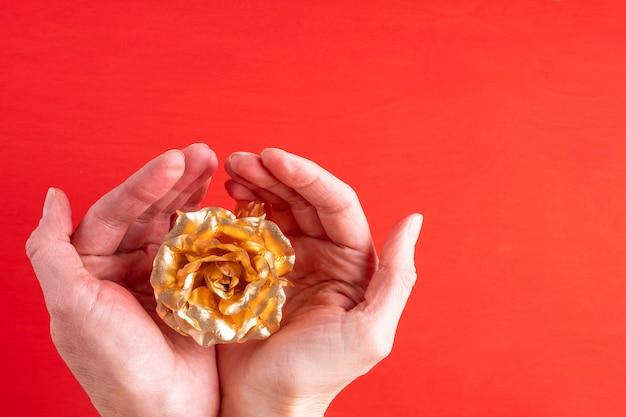 Mãos femininas seguram uma rosa dourada com uma rosa símbolo do amor, relacionamentos em um fundo vermelho