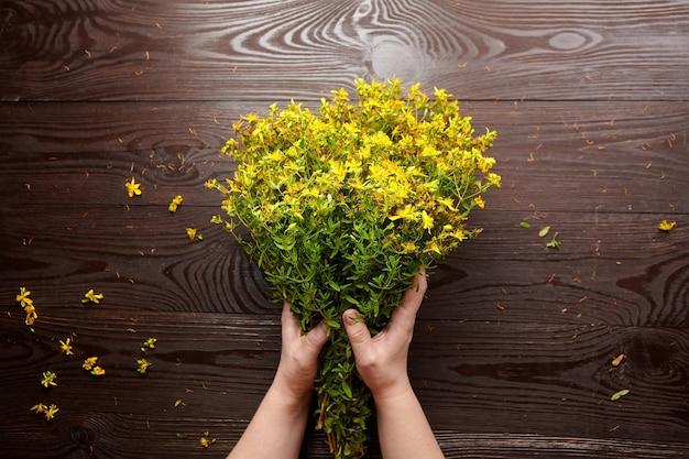 Mãos femininas segurando um ramo de flores de hypericum perforatum ou st johns wort sobre a mesa, vista superior