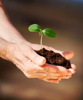 Mãos humanas com planta