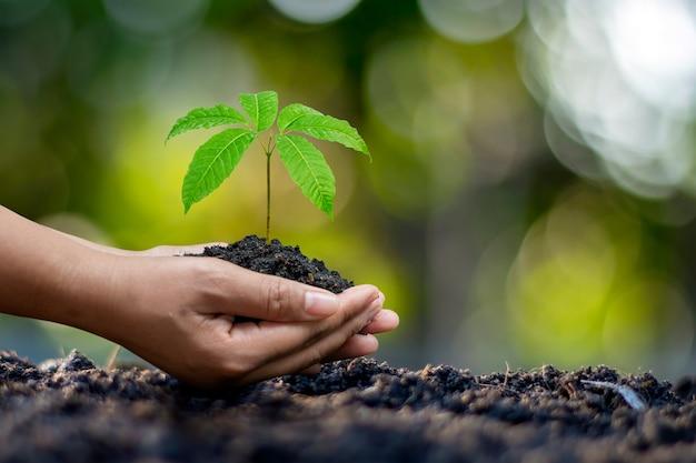 Mãos humanas plantando mudas ou árvores no solo dia da terra e campanha de aquecimento global.