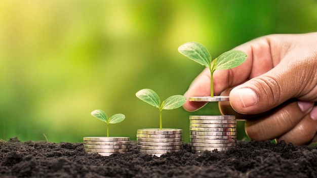 Mãos humanas segurando dinheiro e plantas crescendo