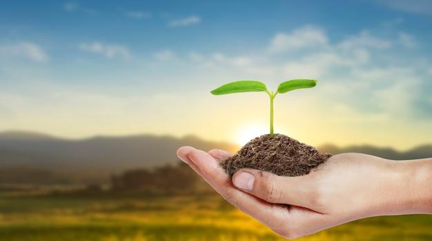 Mãos humanas segurando uma planta jovem