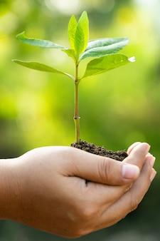 Mãos humanas segurando uma planta verde jovem. salve o mundo e o conceito do dia mundial do meio ambiente