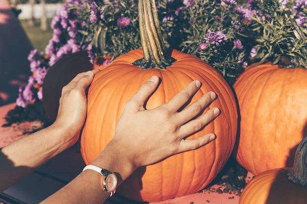 Mãos mantêm abóbora laranja no mercado da fazenda ou festival sazonal. colheita de abóboras no outono.