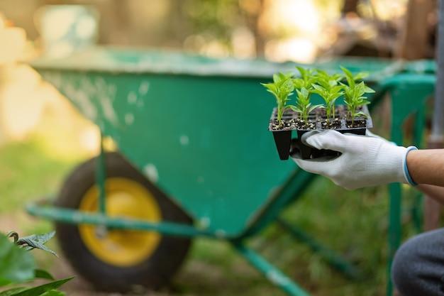 Mãos nas luvas de jardim seguram um conjunto de vasos com mudas de pimenta para o plantio de plantas na primavera. carro jardim desfocado no fundo. conceito ambiental. cultivo doméstico orgânico.