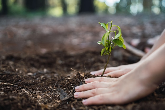 Mãos plantando uma árvore na natureza para salvar a terra - conceito de ecologia ambiental.
