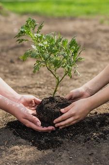Mãos, plantar árvore
