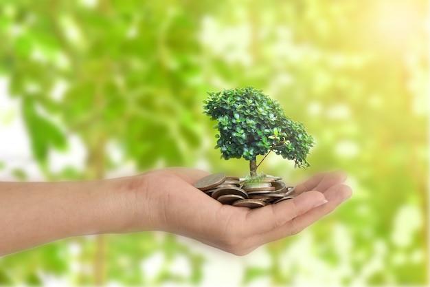 Mãos que guardam a árvore que sprouting de um punhado das moedas.