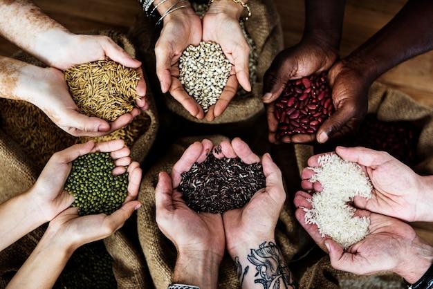 Mãos segurando a colheita de grãos frescos