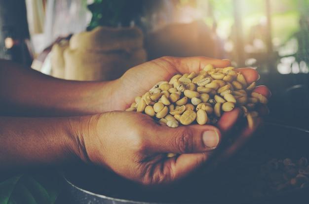 Mãos, segurando, colher, de, feijões café não, descascado