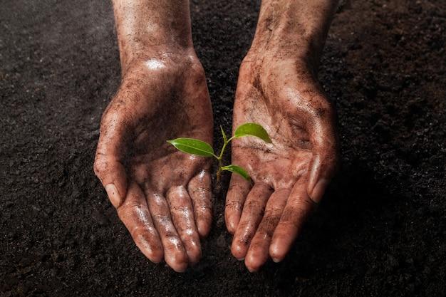 Mãos segurando e protegendo uma jovem planta verde na chuva