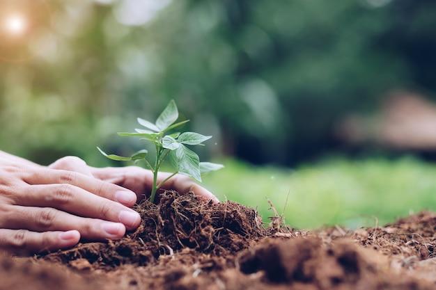 Mãos, segurando, jovem, planta, crescendo, solo