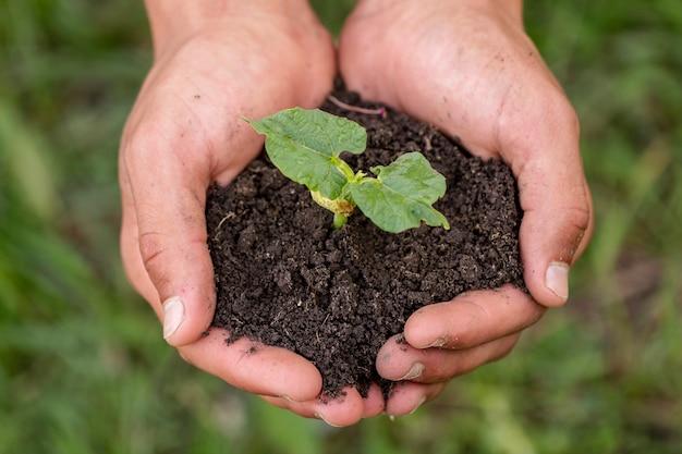 Mãos segurando o solo com planta orgânica