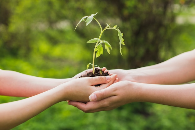 Mãos, segurando, pequeno, planta