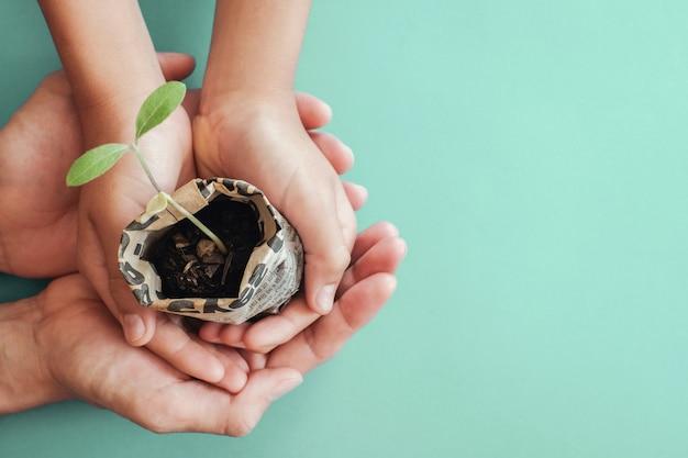 Mãos segurando plantas mudas em pote de jornal