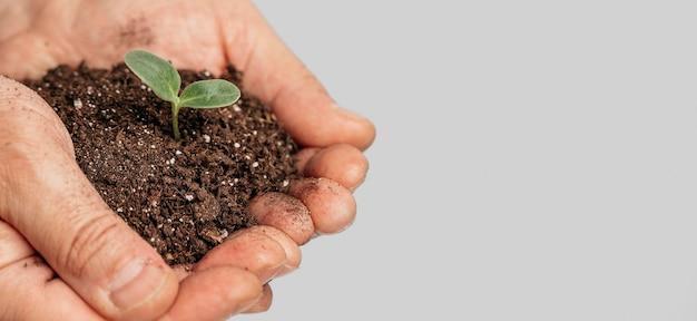 Mãos segurando solo e planta em crescimento com espaço de cópia