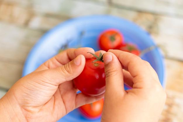 Mãos segurando tomates cerejas