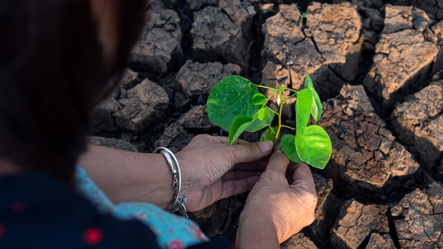 Mãos, segurando, um, árvore, crescendo, ligado, terra rachada, salvar mundo, problemas ambientais