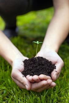 Mãos segurando um broto jovem de maconha medicinal em um fundo de grama verde close-up, planta de cannabis nas palmas das mãos.