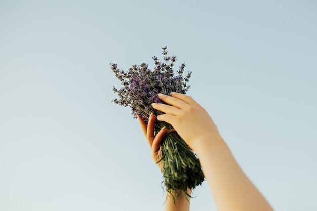 Mãos segurando um buquê de violeta lavanda no céu azul no fundo