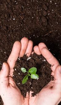 Mãos segurando um rebento na superfície do solo