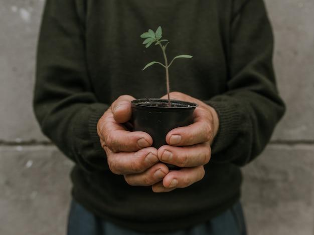 Mãos segurando um vaso preto com uma planta verde