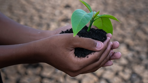 Mãos segurando uma árvore que cresce no chão rachado