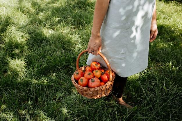 Mãos segurando uma cesta de tomates maduros