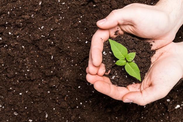 Mãos segurando uma muda na superfície do solo