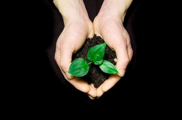 Mãos segurando uma muda no solo no preto