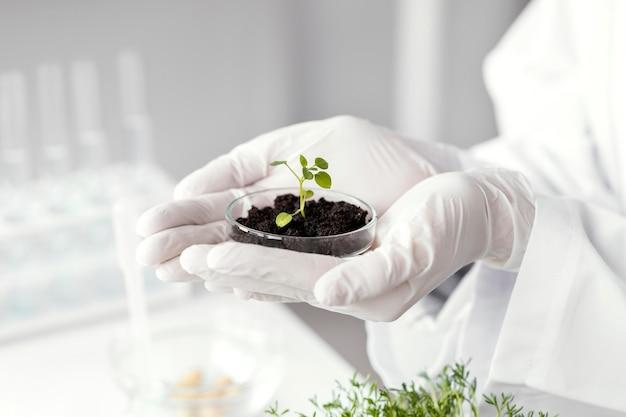 Mãos segurando uma planta em uma placa de petri