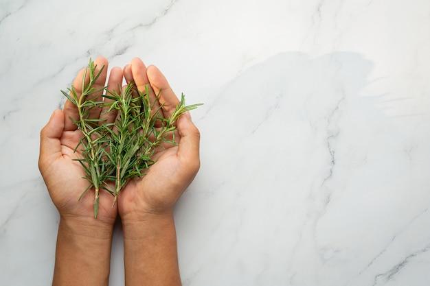 Mãos segurando uma planta fresca de alecrim