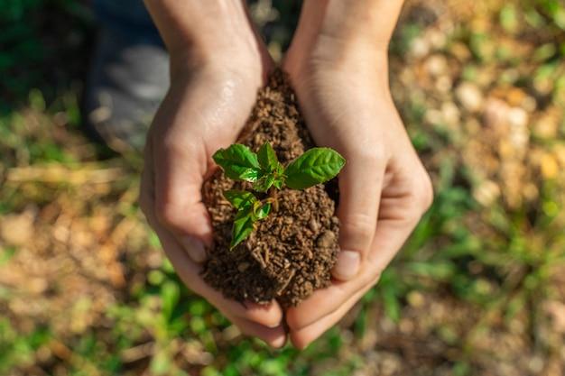 Mãos segurando uma planta jovem desfocar o fundo verde da natureza com a luz do sol