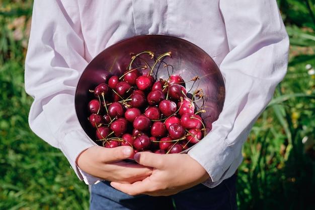 Mãos segurando uma tigela com cerejas frescas maduras. colhendo frutas silvestres de verão