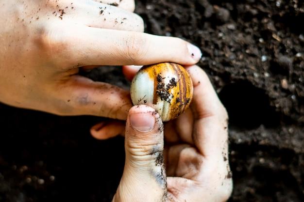 Mãos sujas e enlameadas ind uma jóia no chão do solo