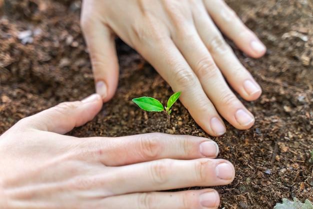 Mãos tocando uma jovem planta verde em um jardim com luz do sol