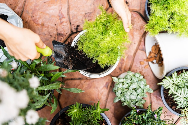 Mãos transplantando uma planta para um novo vaso em casa