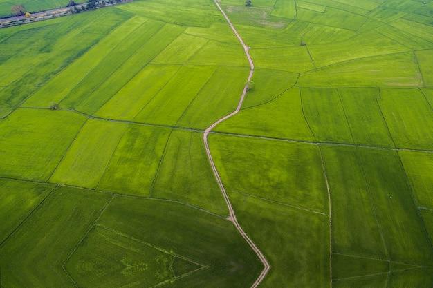 Mapa de fazenda de arroz, olho de pássaro view.soft foco