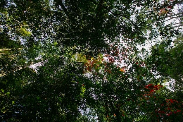 Maple árvores nas montanhas no inverno