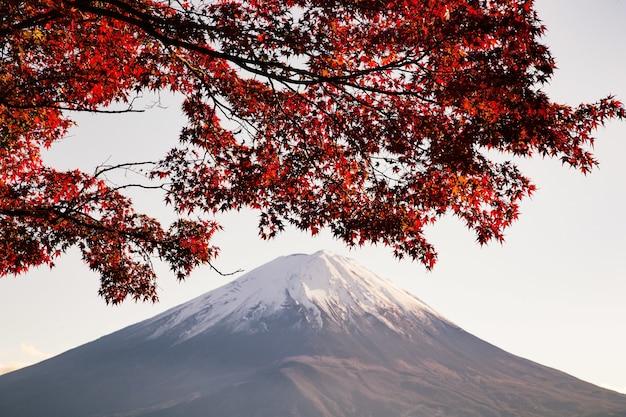 Maple tree com folhas vermelhas sob a luz do sol e uma montanha coberta de neve