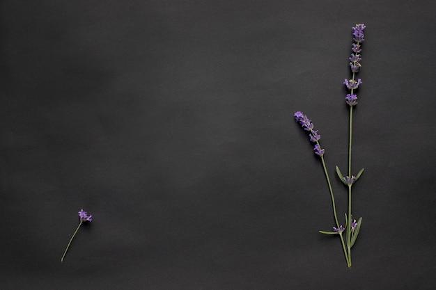 Maquete criativa de três ramos de lavanda em fundo preto