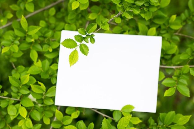 Maquete de cartão de papel em um folhas verdes