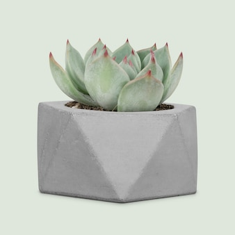 Maquete de planta suculenta em um pequeno vaso cinza