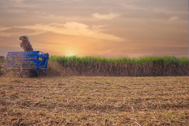 Máquina colhedora de cana-de-açúcar trabalhando em fazenda de açúcar