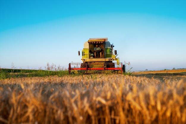 Máquina de colheita que trabalha no campo na manhã ensolarada. conceito de agricultura. colheitadeira no campo de trigo.