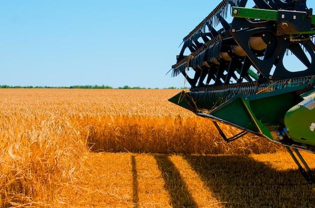 Máquinas agrícolas recolhem colheita de trigo amarelo em campo aberto em um dia ensolarado