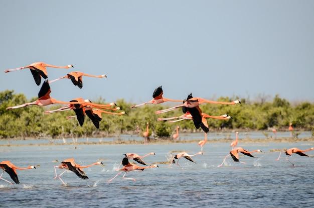 Mar com gaivotas voando acima com vegetação na parede Foto gratuita