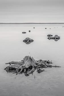 Mar com troncos