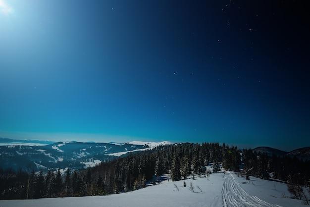 Maravilhosa bela paisagem de inverno com pinheiros altos e esguios crescendo em uma colina entre montes de neve