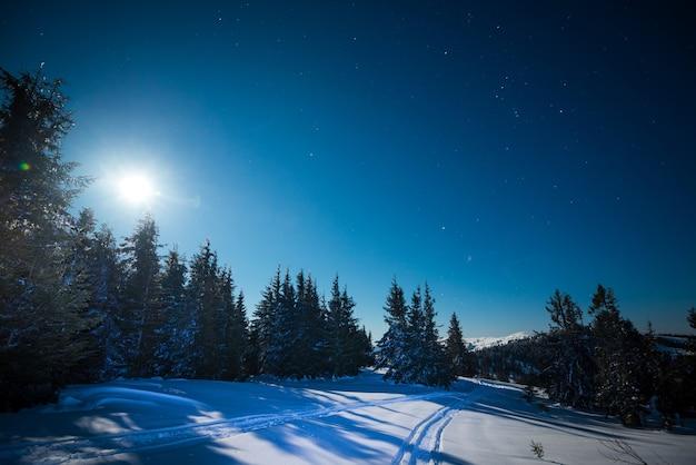 Maravilhosa bela paisagem de inverno de pinheiros altos e delgados crescendo em uma colina entre montes de neve em uma noite estrelada de inverno gelado ensolarado contra um céu azul. conceito de paz e silêncio